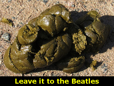 Horse dung - Leave it to the Beatles (spelled like The Beatles instead of Dung Beetles)